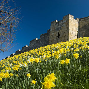 Top 4 things to do this spring in York